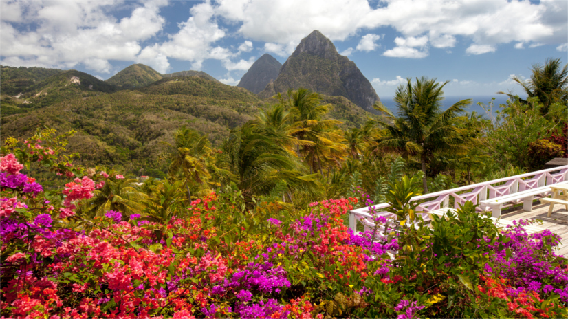 St Lucia Flowers